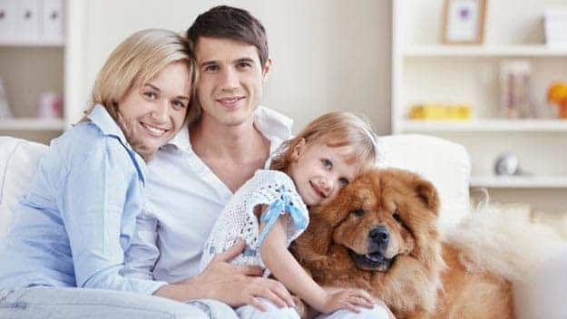 Wills & Trusts dog-young-family Direct Wills Sheffield